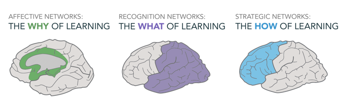 Universal Design for Learning and the three different brain networks